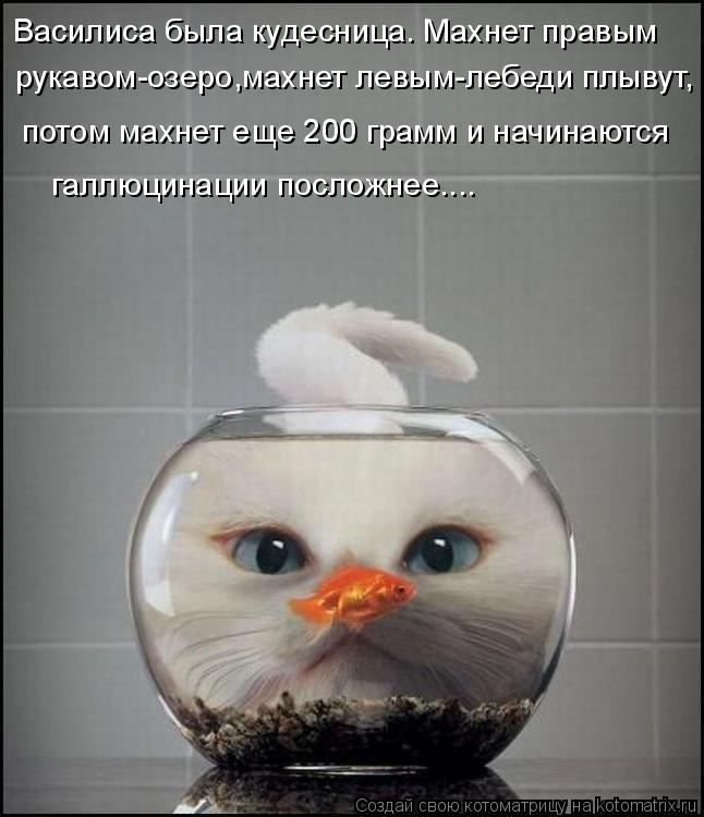 Котоматрица: Василиса была кудесница. Махнет правым  рукавом-озеро,махнет левым-лебеди плывут, потом махнет еще 200 грамм и начинаются галлюцинации посло