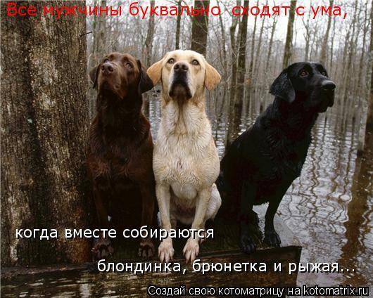Котоматрица: когда вместе собираются  блондинка, брюнетка и рыжая... Все мужчины буквально  сходят с ума,