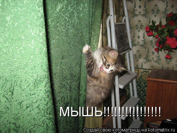 Котоматрица: МЫШЬ!!!!!!!!!!!!!!!!