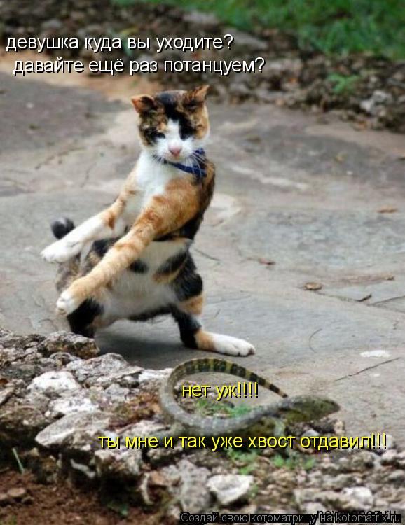 Котоматрица: девушка куда вы уходите? давайте ещё раз потанцуем? ты мне и так уже хвост отдавил!!! нет уж!!!!