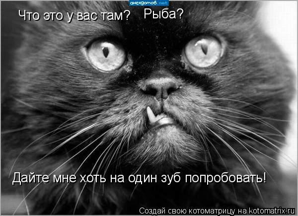 Котоматрица: Что это у вас там? Рыба? Дайте мне хоть на один зуб попробовать!