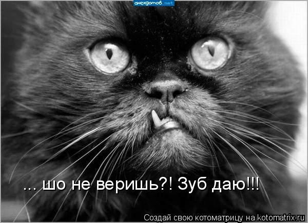 Котоматрица: ... шо не веришь?! Зуб даю!!!