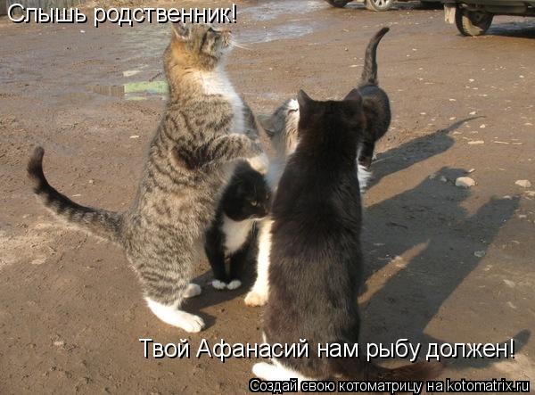 Котоматрица: Слышь родственник! Твой Афанасий нам рыбу должен!