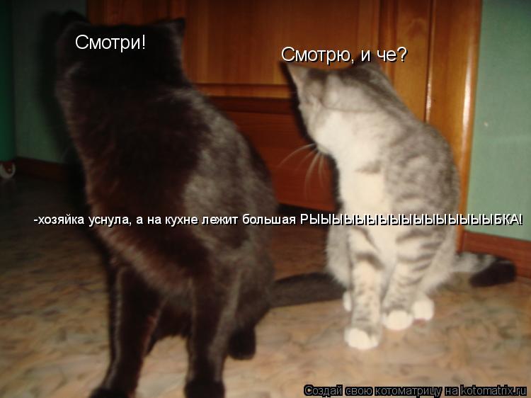Котоматрица: Смотри!  Смотрю, и че? -хозяйка уснула, а на кухне лежит большая РЫЫЫЫЫЫЫЫЫЫЫЫЫЫЫЫБКА!