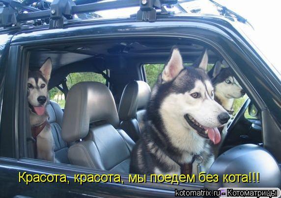 Котоматрица: Красота, красота, мы поедем без кота!!!