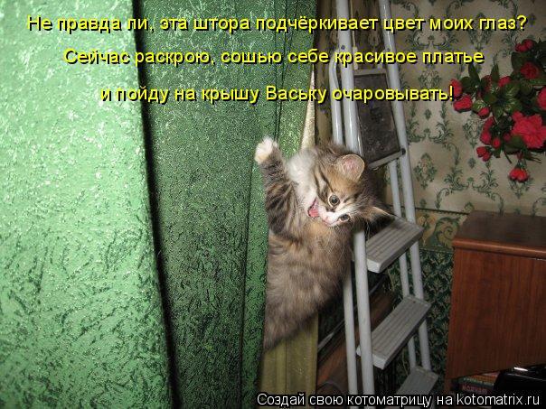 Котоматрица: Не правда ли, эта штора подчёркивает цвет моих глаз? Сейчас раскрою, сошью себе красивое платье и пойду на крышу Ваську очаровывать!