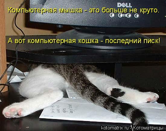 Котоматрица: Компьютерная мышка - это больше не круто. А вот компьютерная кошка - последний писк!