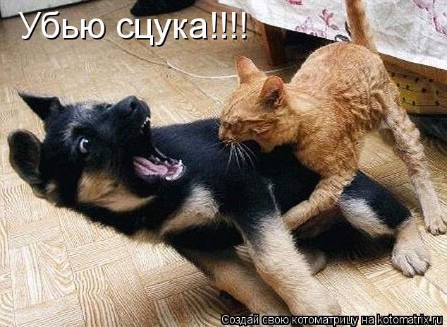 Котоматрица: Убью сцука!!!!