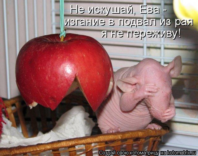 Котоматрица: Не искушай, Ева - изгание в подвал из рая я не переживу!