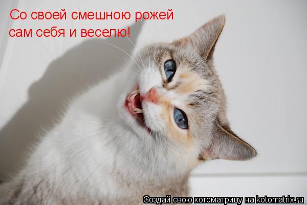 Котоматрица: Со своей смешною рожей сам себя и веселю!