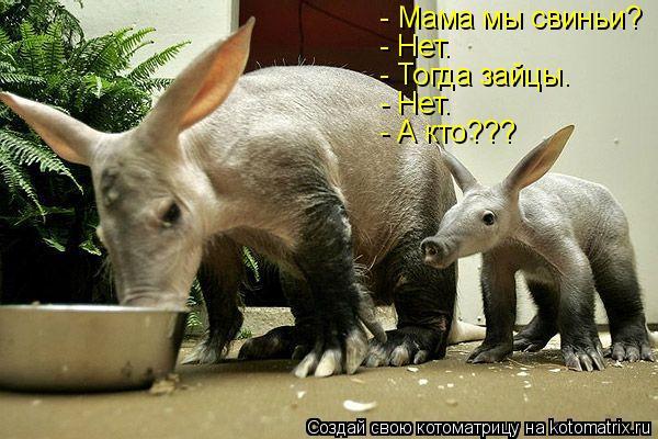 Котоматрица: - Мама мы свиньи? - Нет. - Тогда зайцы. - Нет. - А кто???