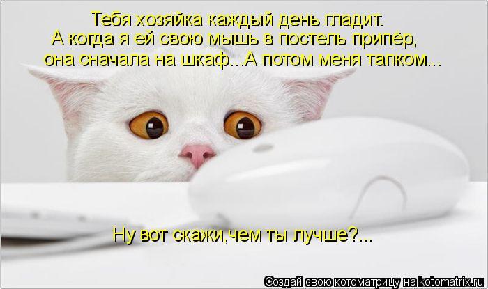 Котоматрица: Тебя хозяйка каждый день гладит. А когда я ей свою мышь в постель припёр, она сначала на шкаф...А потом меня тапком... Ну вот скажи,чем ты лучше?