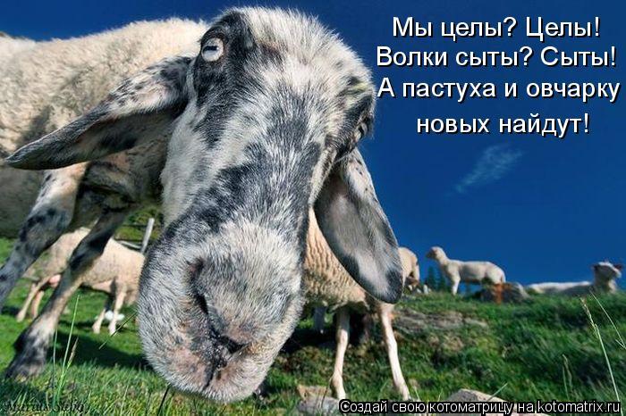 Котоматрица: Мы целы? Целы! Волки сыты? Сыты! А пастуха и овчарку новых найдут!