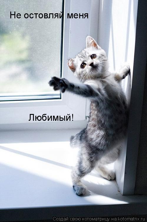 Котоматрица: Не остовляй меня Любимый!