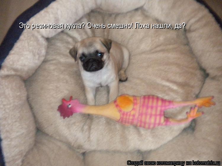 Котоматрица: Это резиновая кукла? Очень смешно! Лоха нашли, да?
