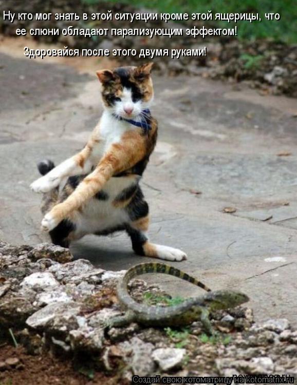 Котоматрица: Ну кто мог знать в этой ситуации кроме этой ящерицы, что ее слюни обладают парализующим эффектом! Здоровайся после этого двумя руками!