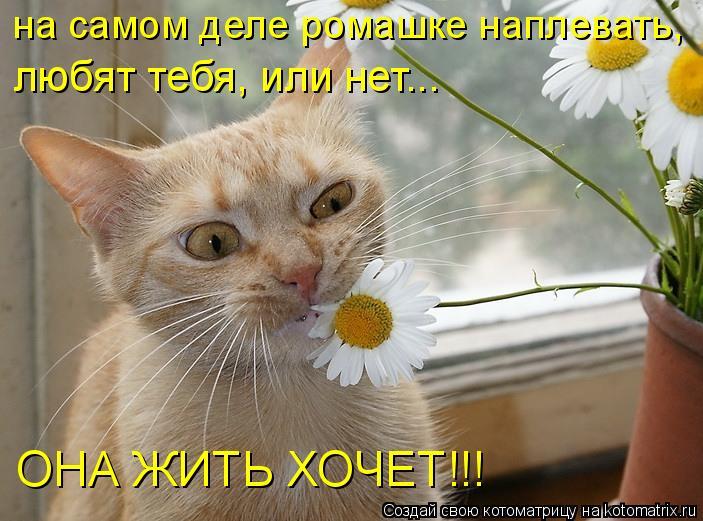Котоматрица: на самом деле ромашке наплевать, любят тебя, или нет... ОНА ЖИТЬ ХОЧЕТ!!!