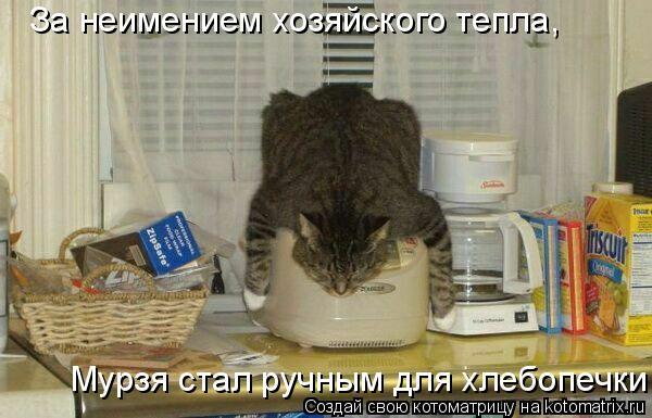 Котоматрица: За неимением хозяйского тепла,   Мурзя стал ручным для хлебопечки