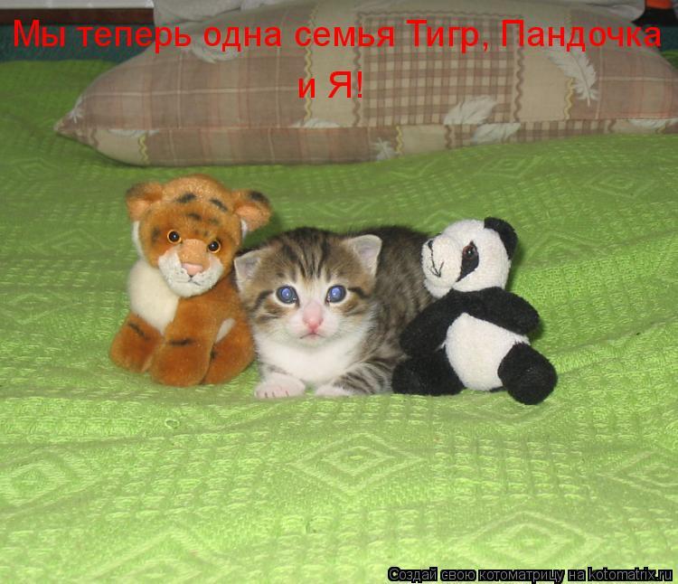 Котоматрица: Мы теперь одна семья Тигр, Пандочка и Я!