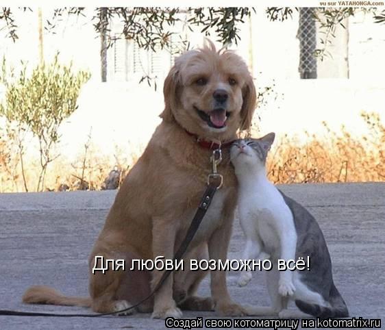 Котоматрица: Для любви возможно всё!