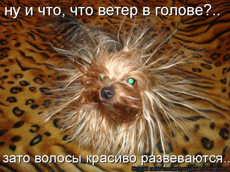 Котоматрица: ну и что, что ветер в голове?.. зато волосы красиво развеваются...