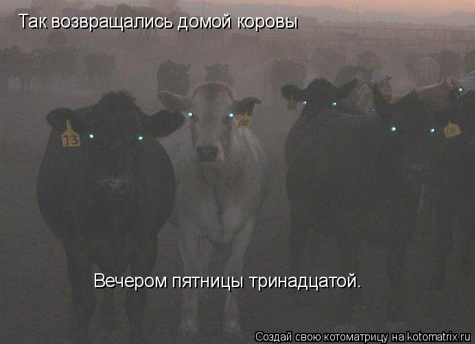 Котоматрица: Так возвращались домой коровы Вечером пятницы тринадцатой.