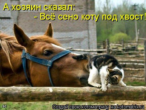 Котоматрица: А хозяин сказал: - Всё сено коту под хвост!