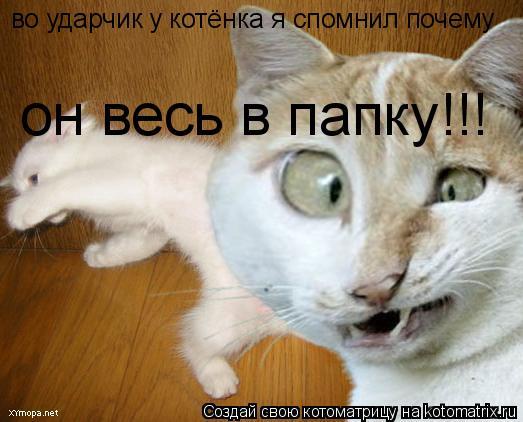 Котоматрица: во ударчик у котёнка я спомнил почему он весь в папку!!!