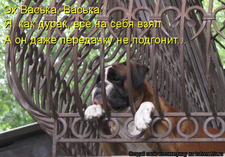Котоматрица: Эх Васька, Васька.  Я, как дурак, все на себя взял А он даже передачку не подгонит...