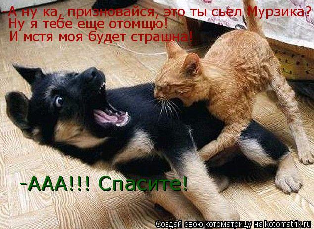 Котоматрица: -А ну ка, призновайся, это ты сьел Мурзика? Ну я тебе еще отомщю! И мстя моя будет страшна! -ААА!!! Спасите!