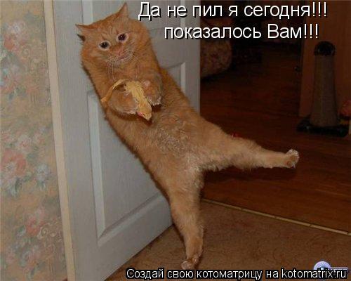 Котоматрица: Да не пил я сегодня!!! Да не пил я сегодня!!! показалось Вам!!!