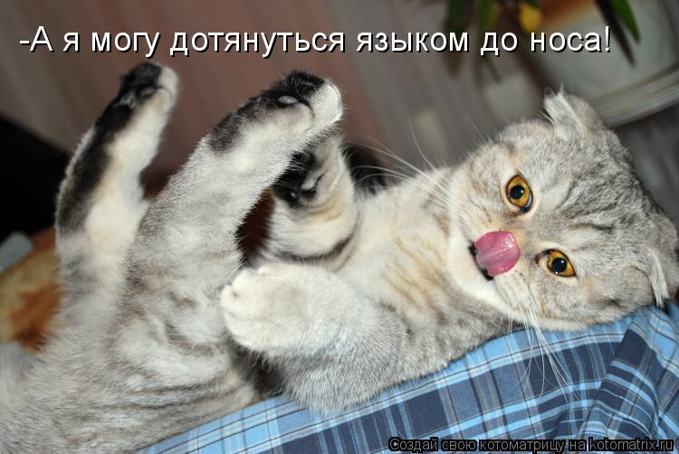 Котоматрица: -А я могу дотянуться языком до носа!