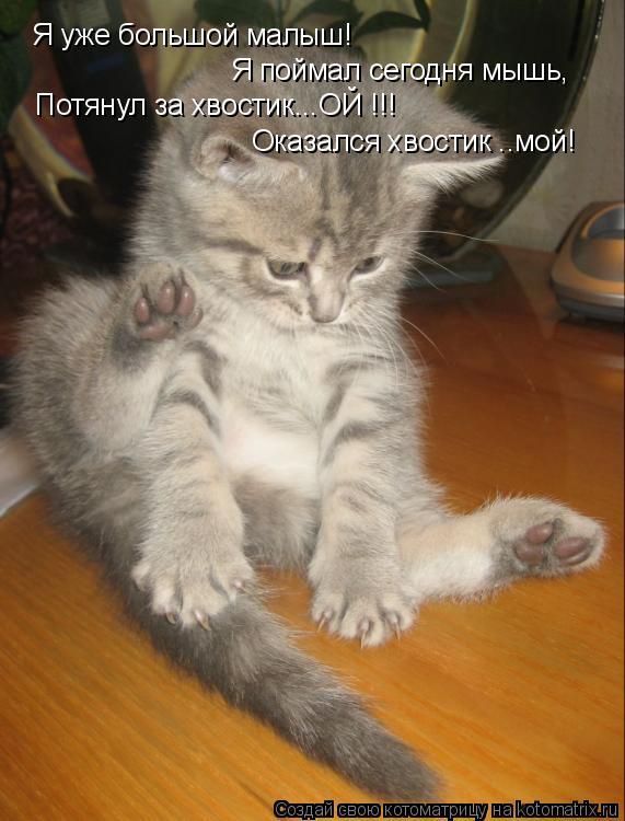 Котоматрица: Я уже большой малыш! Я поймал сегодня мышь, Потянул за хвостик...ОЙ !!! Оказался хвостик ..мой!