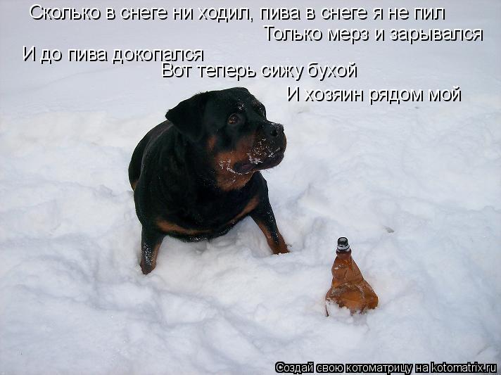 Котоматрица: Сколько в снеге ни ходил, пива в снеге я не пил Только мерз и зарывался И до пива докопался Вот теперь сижу бухой И хозяин рядом мой