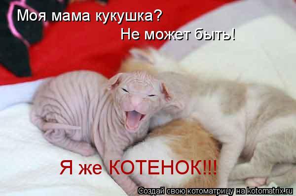 Котоматрица: Моя мама кукушка? Не может быть! Я же КОТЕНОК!!!