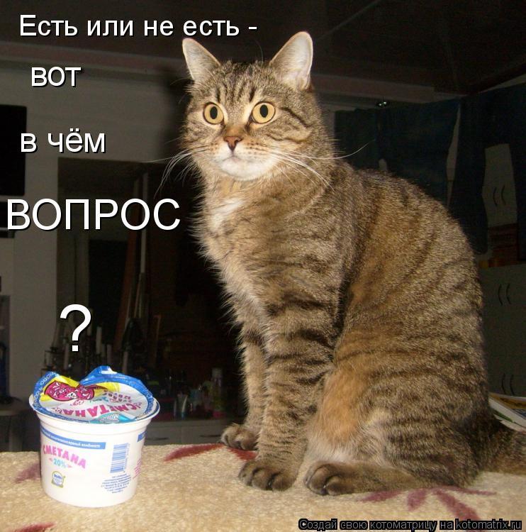 Котоматрица: Есть или не есть -  вот в чём ВОПРОС ?
