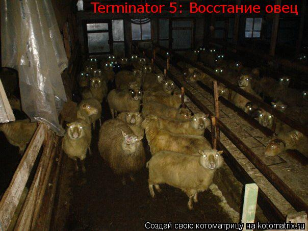 Котоматрица: Terminator 5: Восстание овец Terminator 5: Восстание овец Terminator 5: Восстание овец Terminator 5: Восстание овец