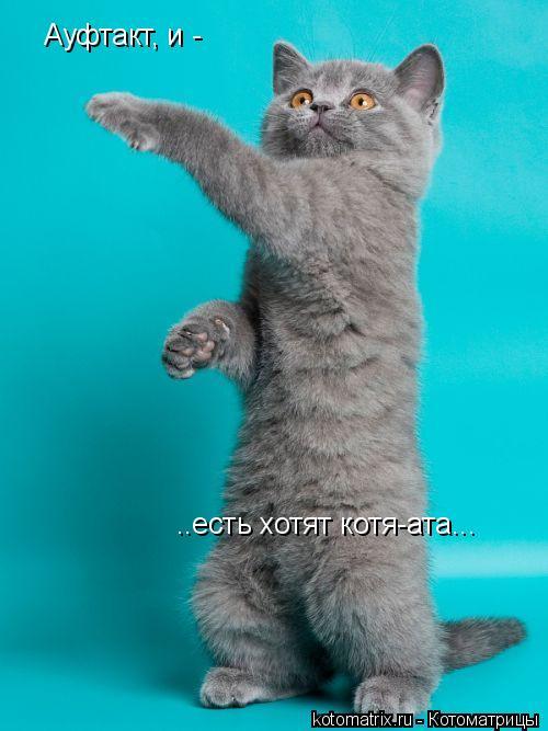 Котоматрица: Ауфтакт, и -  ..есть хотят котя-ата...