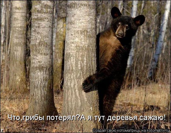Котоматрица: Что,грибы потерял?А я тут деревья сажаю!