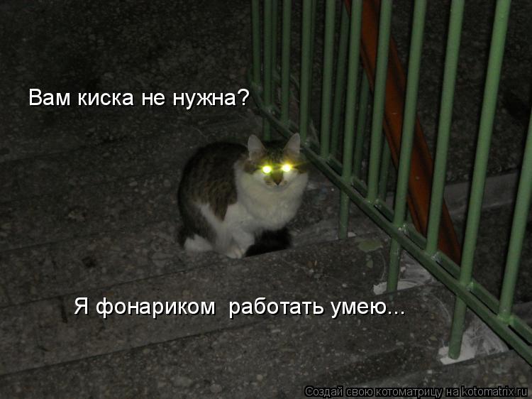 Котоматрица: Вам киска не нужна? Я фонариком  работать умею...