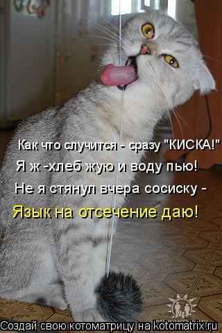 """Котоматрица: Как что случится - сразу """"КИСКА!"""" Я ж -хлеб жую и воду пью! Не я стянул вчера сосиску - Язык на отсечение даю!"""