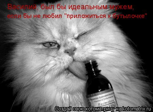 """Котоматрица: Василий, был бы идеальным мужем, если бы не любил """"приложиться к бутылочке"""""""