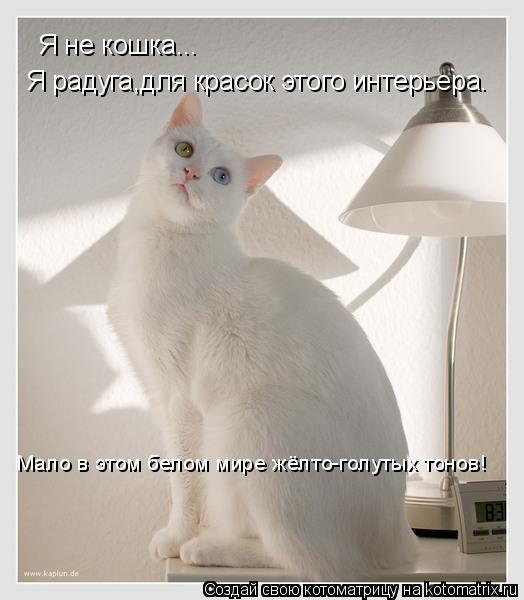 Котоматрица: Я не кошка... Я радуга,для красок этого интерьера. Мало в этом белом мире жёлто-голутых тонов!