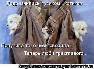 Котоматрица: Додразнилась пусиком...котиком... Получила то, о чём говорила... Теперь люби трёхглавого...