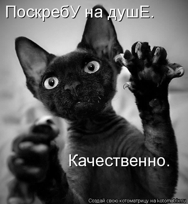http://kotomatrix.ru/images/lolz/2009/09/05/352710.jpg
