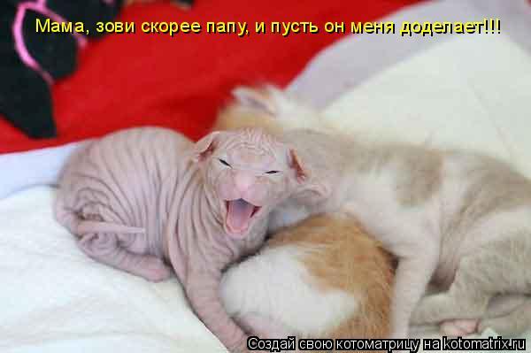 Котоматрица: Мама, зови скорее папу, и пусть он меня доделает!!!