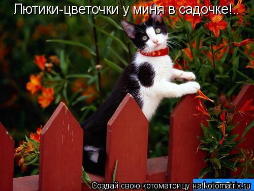 Котоматрица: Лютики-цветочки у миня в садочке!..
