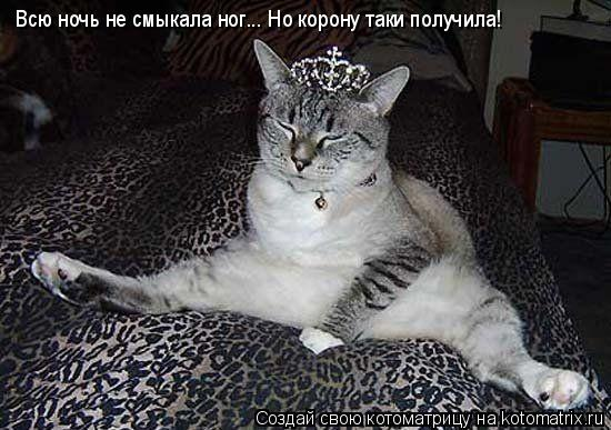 Котоматрица: Всю ночь не смыкала ног... Но корону таки получила!