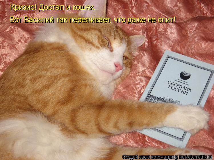 Котоматрица: Кризис! Достал и кошек. Вот Василий так переживает, что даже не спит!