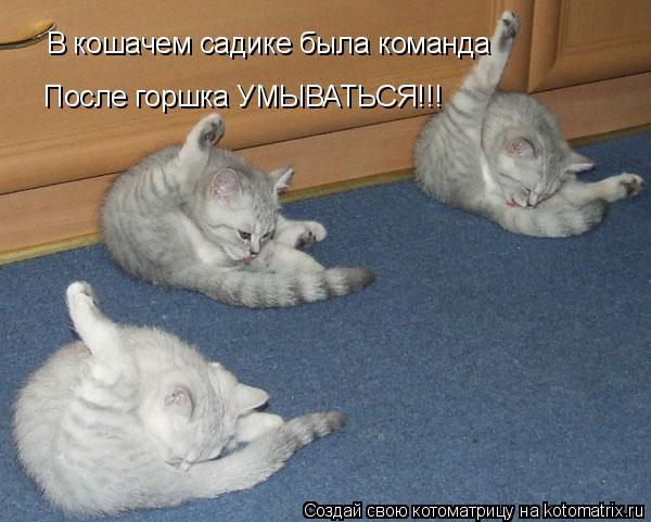 Котоматрица: В кошачем садике была команда После горшка УМЫВАТЬСЯ!!!